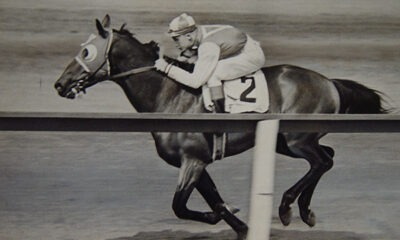 Racehorse Timeline: The Life Of A Racehorse